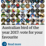 Currawongs can be bastards, but they still get my vote